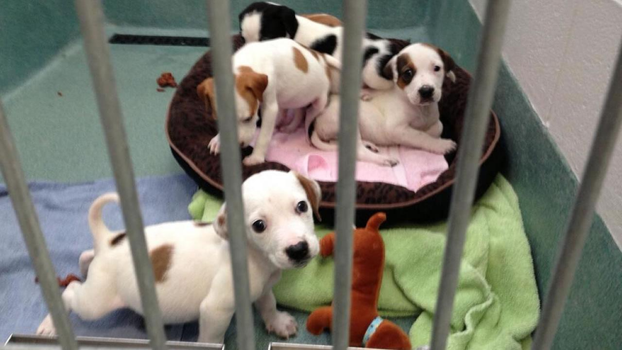 These puppies are available for adoption at the Wake County Animal Shelter