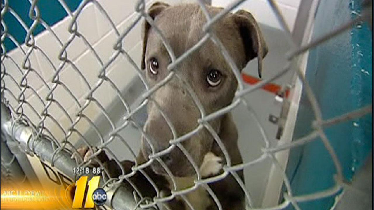 Wake County Animal Shelter forced to send pets to Charlotte