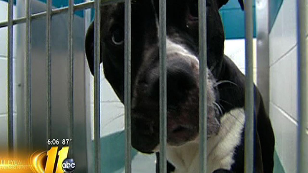 The Wake County Animal Shelter is asking pet owners to consider the high probably of euthanization before surrendering their pets