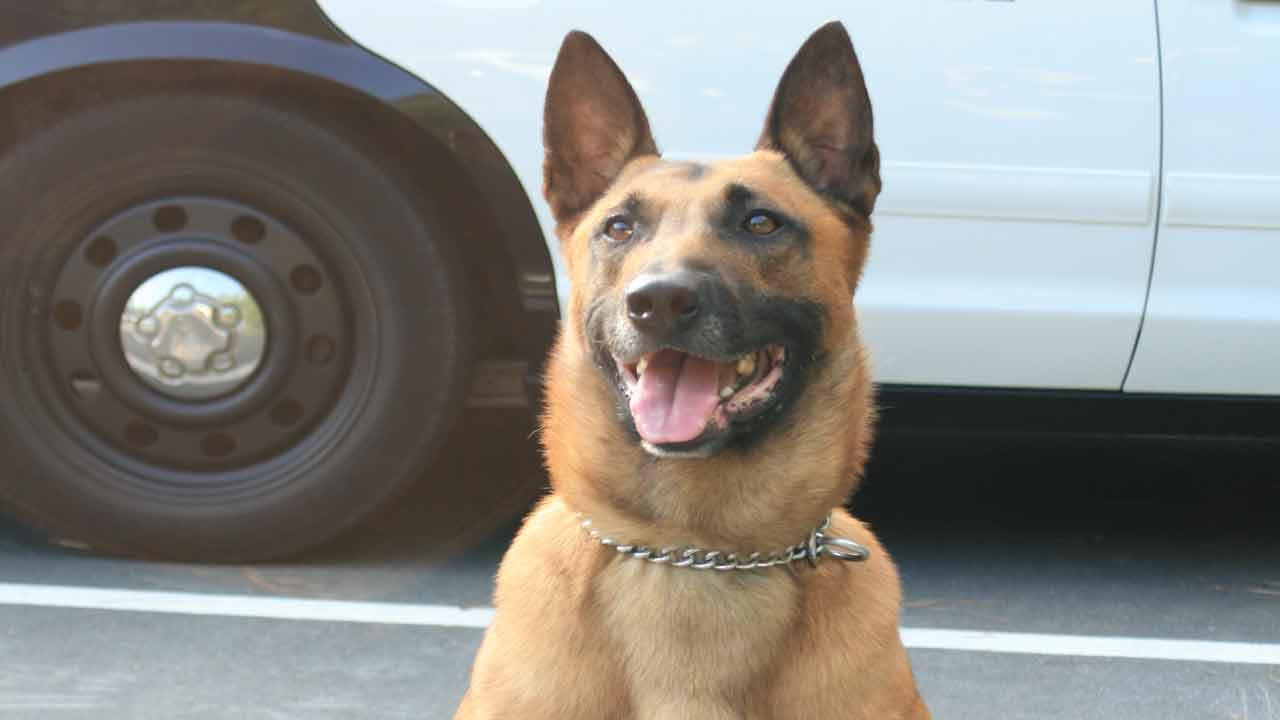 Missing police canine in Durham named Kearny