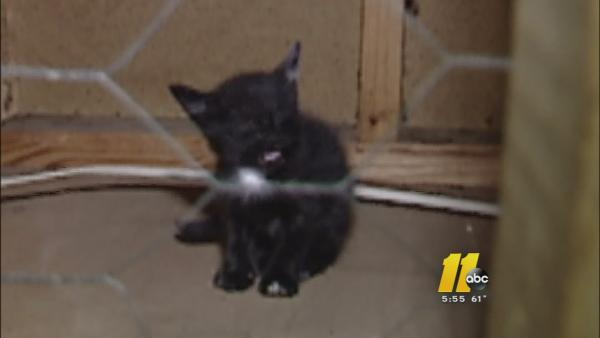 Troubleshooter helps rescue trapped cats