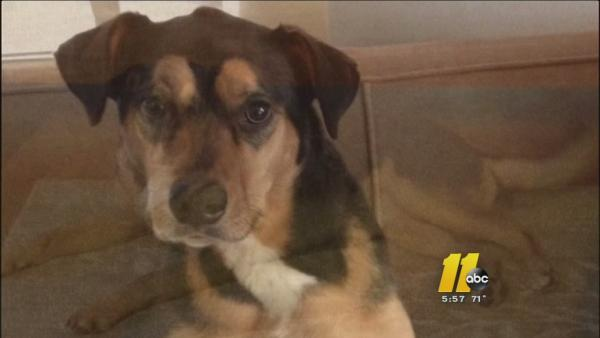 Homeowner loses dog in Durham break-in