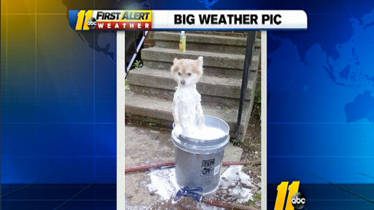Privacy Please! Photo of Nicky holding on to the side of a bucket during his weekly bath. <span class=meta>(iWitness viewer photo)</span>