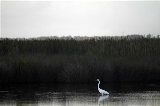 A bird walks in water in Coinjock, N.C., Friday, Aug. 26, 2011 as Hurricane Irene steams toward the North Carolina coast. <span class=meta>(AP Photo&#47; Jim R. Bounds)</span>