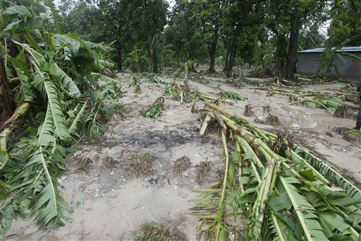"<div class=""meta ""><span class=""caption-text "">Downed banana trees lie on a farm damaged by the heavy rains from Hurricane Sandy in Gran Goave, Haiti, Friday, Oct. 26, 2012.  (AP Photo/ Dieu Nalio Chery)</span></div>"