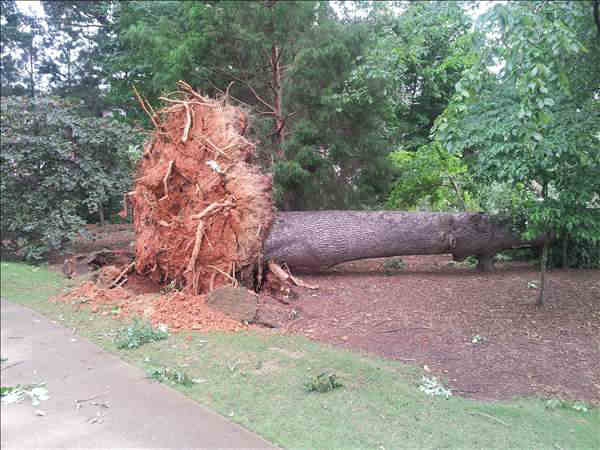 Trees down in Wakefield off the 10th hole green. <span class=meta>(WTVD Photo&#47; UReport&#47;Les Burleson)</span>