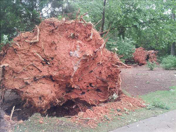 "<div class=""meta image-caption""><div class=""origin-logo origin-image ""><span></span></div><span class=""caption-text"">Trees down in Wakefield off the 10th hole green. (WTVD Photo/ UReport/Les Burleson)</span></div>"
