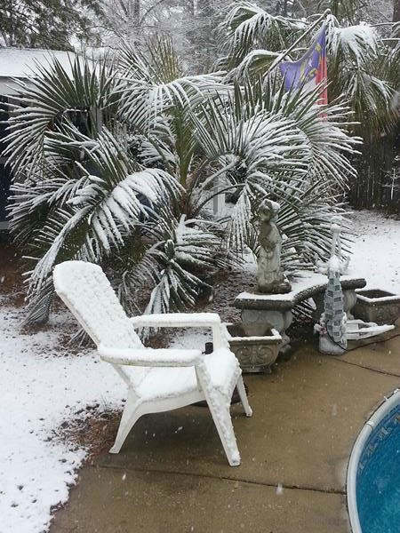 Snow in North Carolina. <span class=meta>(WTVD Photo&#47; ABC11 viewer submitted image)</span>