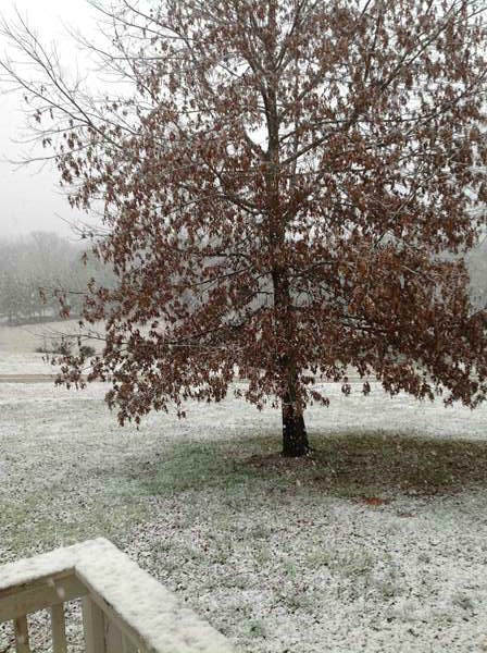 "<div class=""meta ""><span class=""caption-text "">Snow falls in central North Carolina February 16. (WTVD Photo/ viewer photo submitted via uReport)</span></div>"