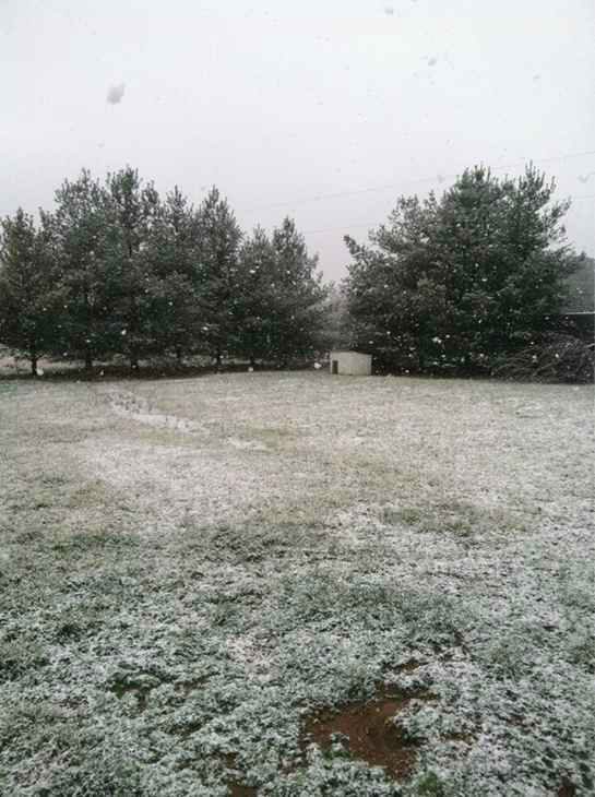 Snow in central North Carolina February 16. <span class=meta>(WTVD Photo&#47; Viewer submitted photo via uReport)</span>
