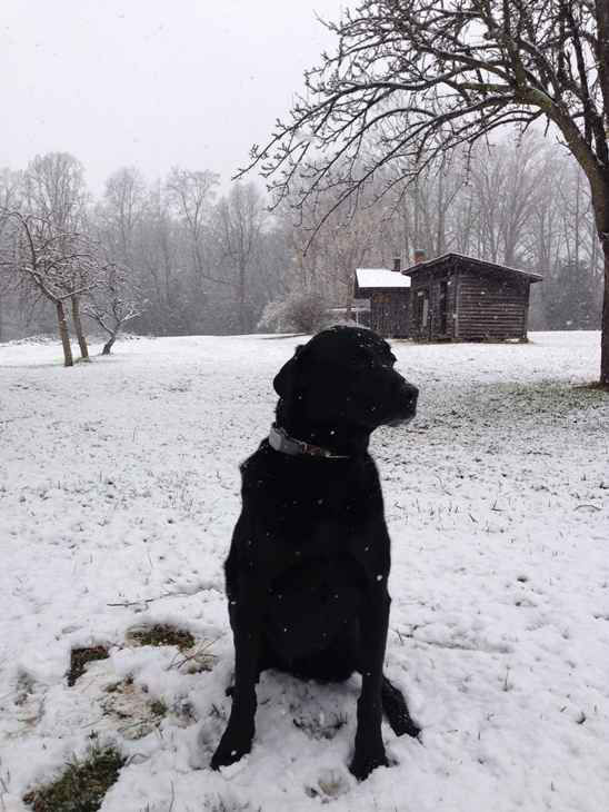 Snow falls in central North Carolina February 16. <span class=meta>(WTVD Photo&#47; Viewer image submitted via uReport)</span>