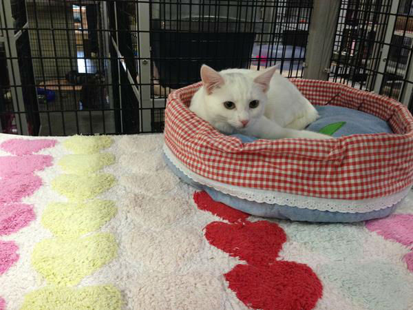 "<div class=""meta image-caption""><div class=""origin-logo origin-image ""><span></span></div><span class=""caption-text"">Raleigh's Safe Haven for Cats is holding huge Black Friday adoption event. Learn more about the cats here: http://safehavenforcats.org/adoptions/meet-the-cats/ (WTVD Photo/ Anna Laurel)</span></div>"