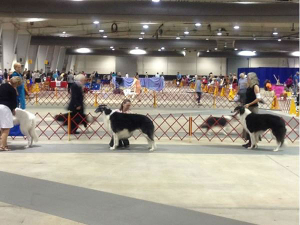 "<div class=""meta ""><span class=""caption-text "">Dogs competed in Raleigh at the American Kennel Club trials (WTVD Photo/ Tommy Harris)</span></div>"