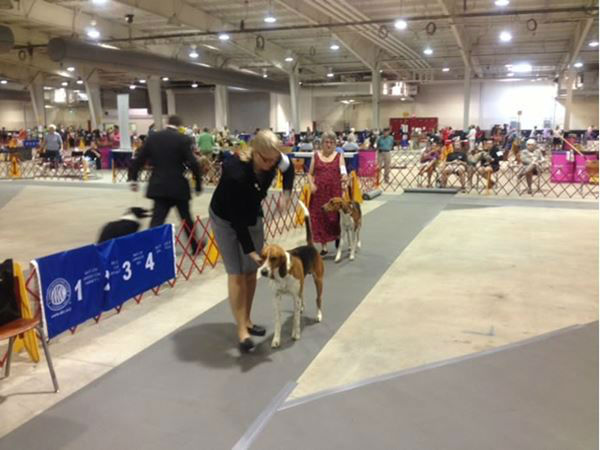 Dogs competed in Raleigh at the American Kennel Club trials <span class=meta>(WTVD Photo&#47; Tommy Harris)</span>