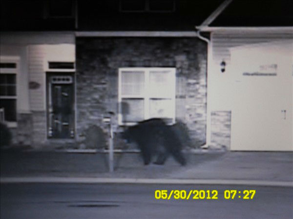 Hope Mills police and Cumberland County sheriff&#39;s deputies spotted a large black bear several times. <span class=meta>(Hope Mills Police Department Photo)</span>