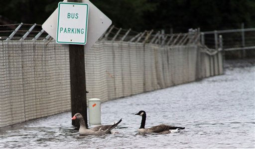 A duck and goose swim in  floodwaters in Windsor, N.C., Monday, Oct. 4, 2010.  <span class=meta>(AP Photo&#47; Jim R. Bounds)</span>