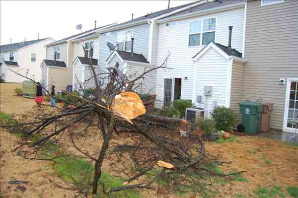 A tree fell behind a home in Morrisville Friday morning.  <span class=meta>(WTVD Photo&#47; Image courtesy viewer Tommy Harris Jr)</span>