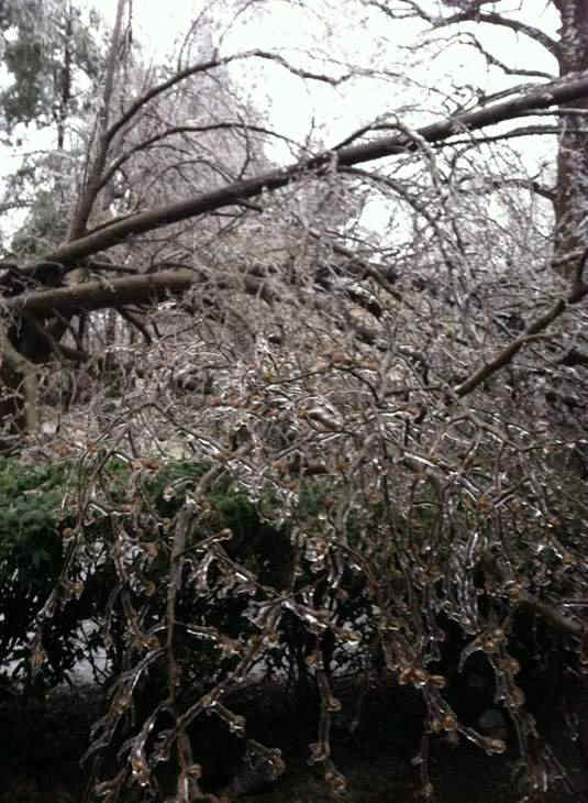 "<div class=""meta image-caption""><div class=""origin-logo origin-image ""><span></span></div><span class=""caption-text"">A blast of rain, sleet, and ice brought down trees and caused thousands of power outages across the region. Seeing damage where you are? Send your pictures to iwitness@abc11mail.com. (Photo/ABC11 iWitness photo)</span></div>"