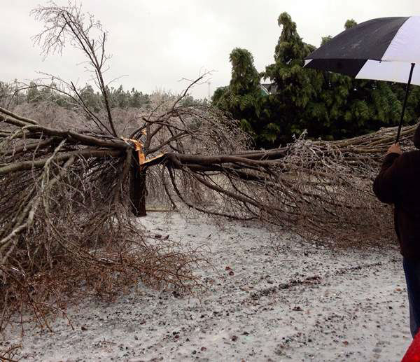 "<div class=""meta ""><span class=""caption-text "">A blast of rain, sleet, and ice brought down trees and caused thousands of power outages across the region. Seeing damage where you are? Send your pictures to iwitness@abc11mail.com. (Photo/ABC11 iWitness photo)</span></div>"