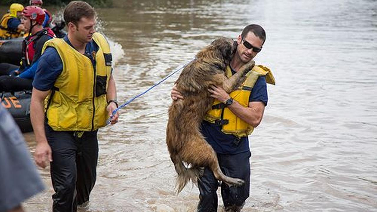 Austin firefighters Matt Harvey and Firefighter Michael Cooper rescue a dog from flood waters. <span class=meta>(Image courtesy Austin Fire Department Facebook)</span>