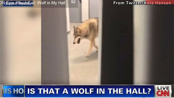 "Olympic luger gets a laugh out of officials with prank      Her priority:      Having some harmless fun   It was the laugh heard 'round the world, or at least the Olympic village. Media outlets were shocked when a    video of a wolf prowling the hallway outside U.S. luger Kate Hansen's dorm room went viral. The wolf turned out to be real. The hallway? Not so much. It was a replica, courtesy of ABC late-night host Jimmy Kimmel. Officials took a    ""no harm, no foul"" attitude, proving laughter is an international     language."