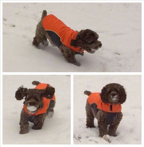 "<div class=""meta ""><span class=""caption-text "">These styling canines are taking the snow by storm. (But remember not to keep pets out in the cold for too long, even if they're bundled up!) (Photo/WABC Photo)</span></div>"