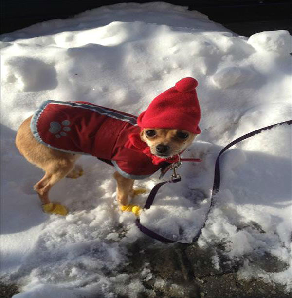 These styling canines are taking the snow by storm. &#40;But remember not to keep pets out in the cold for too long, even if they&#39;re bundled up!&#41; <span class=meta>(Photo&#47;WABC Photo)</span>
