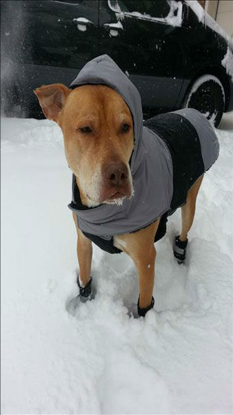 "<div class=""meta image-caption""><div class=""origin-logo origin-image ""><span></span></div><span class=""caption-text"">These styling canines are taking the snow by storm. (But remember not to keep pets out in the cold for too long, even if they're bundled up!) (Photo/WLS Photo)</span></div>"