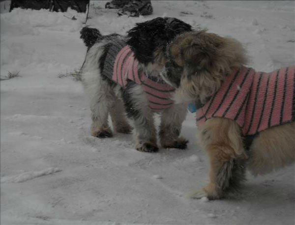 "<div class=""meta ""><span class=""caption-text "">These styling canines are taking the snow by storm. (But remember not to keep pets out in the cold for too long, even if they're bundled up!) (Photo/WLS Photo)</span></div>"