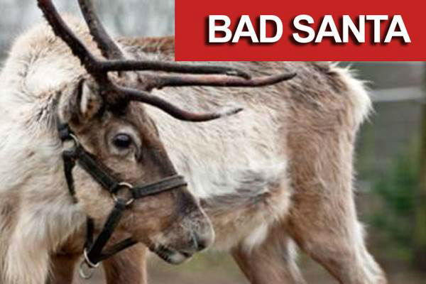...loses his reindeer outside the mall. <span class=meta>(AP)</span>