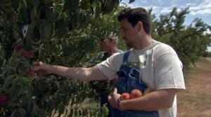 Picking Peaches for Delicious Dishes
