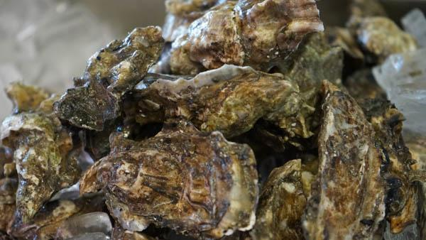 Oakland's Fresh Oysters