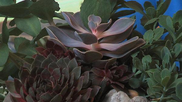 Create a Succulent Container Garden