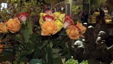 San Francisco Flower and Garden Show