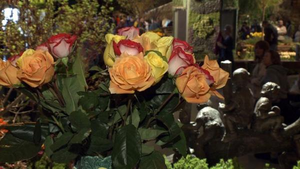 Complete Episode: San Francisco Flower and Garden Show