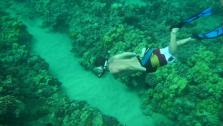 Kona: Under the Sea