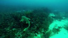Greg photographed this 9 foot Nurse Shark using the GoPro Hero 3+ camera.