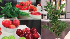 Increase Your Feng Shui with Edible Plants
