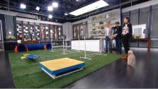 Super-cute dogs overtook our studio when we set up an agility course on set. Dog behavior consultant Deena Cooper says agility is a great way to build confidence in dogs.